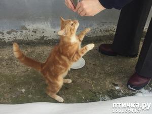 фото: Кот и кошка