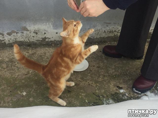 фото 1: Кот и кошка