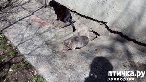 фото: А кошки снова прибывают
