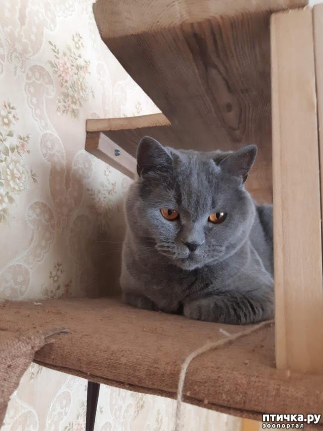 фото 12: Когти кошки и