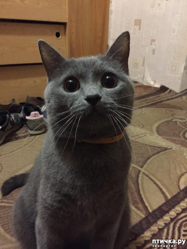 фото 1: Еще один несчастный кот...