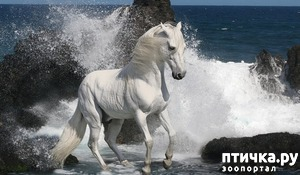 фото: Никогда не сяду на лошадь!