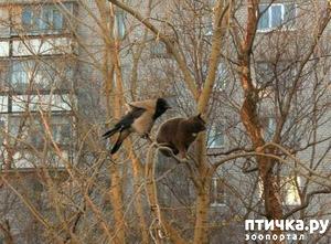 фото: Коты прилетели