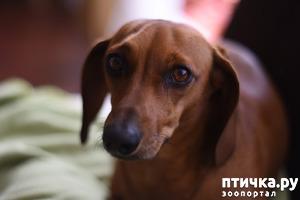 фото: Разочарование как повод избавиться от собаки