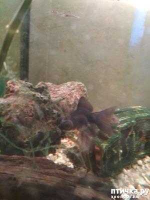 фото: Переселение рыбок в общий аквариум.