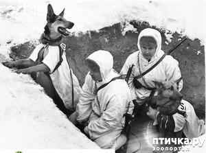 фото: В память о четвероногих участниках Великой Отечественной войны