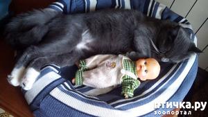 фото: Спят усталые игрушки, коты спят