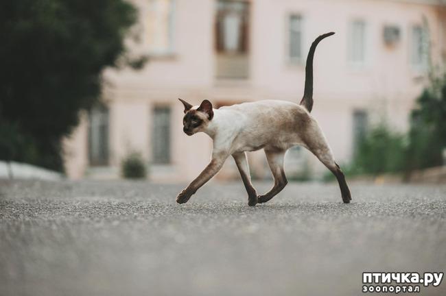 фото 3: Fusi Love Mi Ra Cat (SIAb)