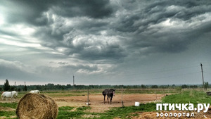 фото: Годовщина переезда в село.