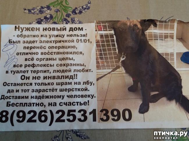 фото 1: Потерялся пес