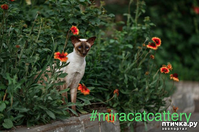 фото 1: Fusi Love Mi Ra Cat (SIAb)
