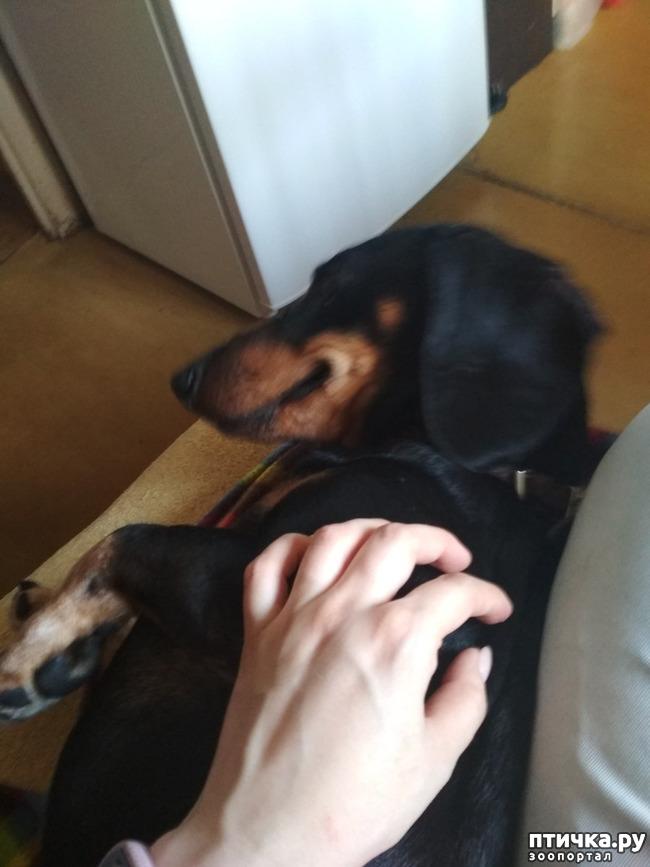 фото 1: Собаки играют