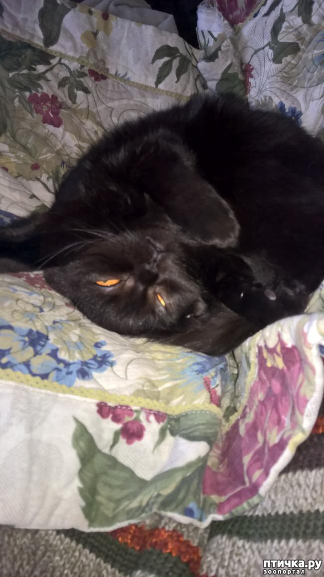фото 3: Кошачья йога. Поза