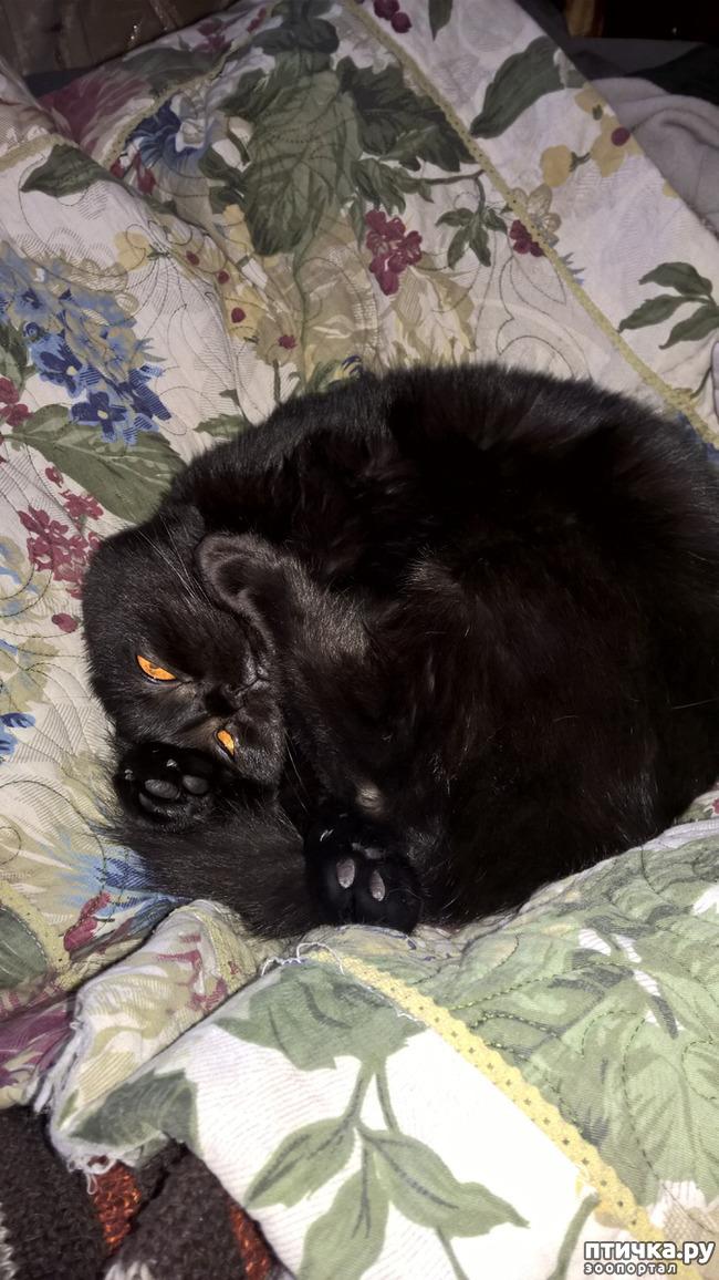 фото 1: Кошачья йога. Поза