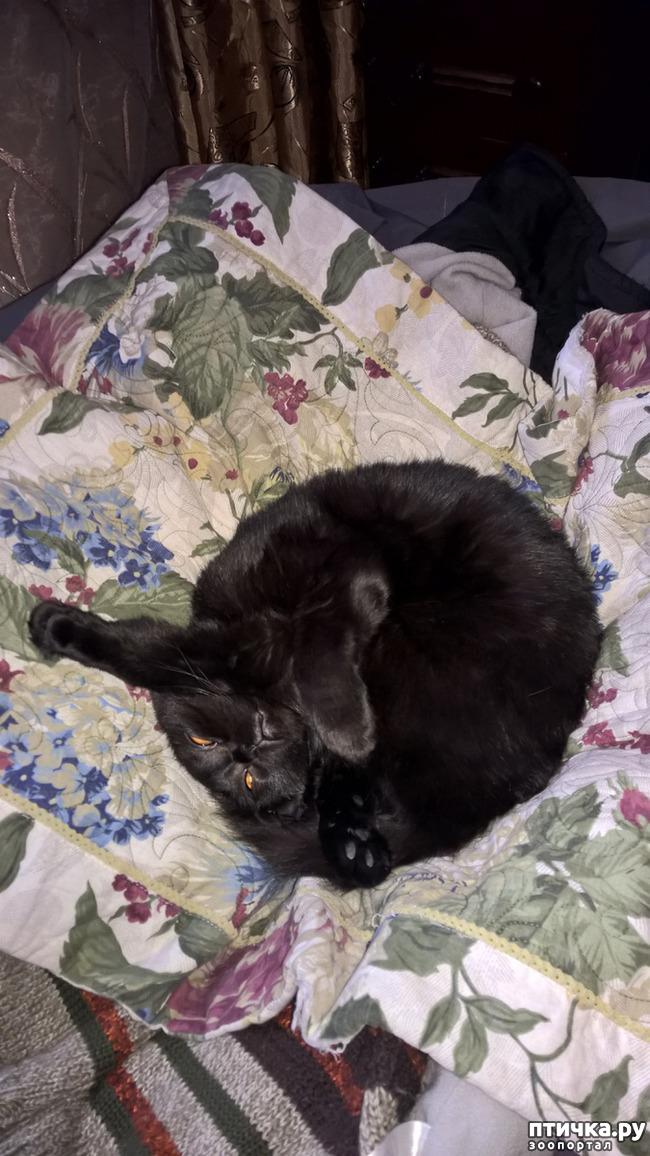 фото 2: Кошачья йога. Поза