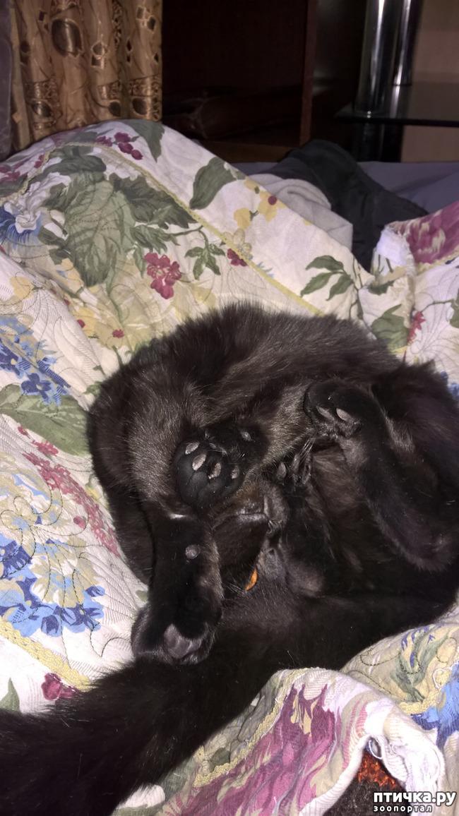 фото 5: Кошачья йога. Поза