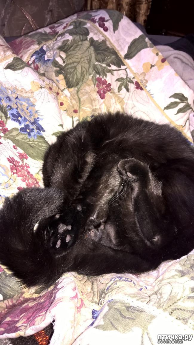 фото 6: Кошачья йога. Поза