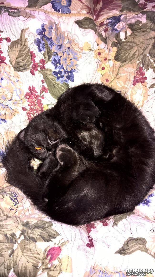 фото 4: Кошачья йога. Поза