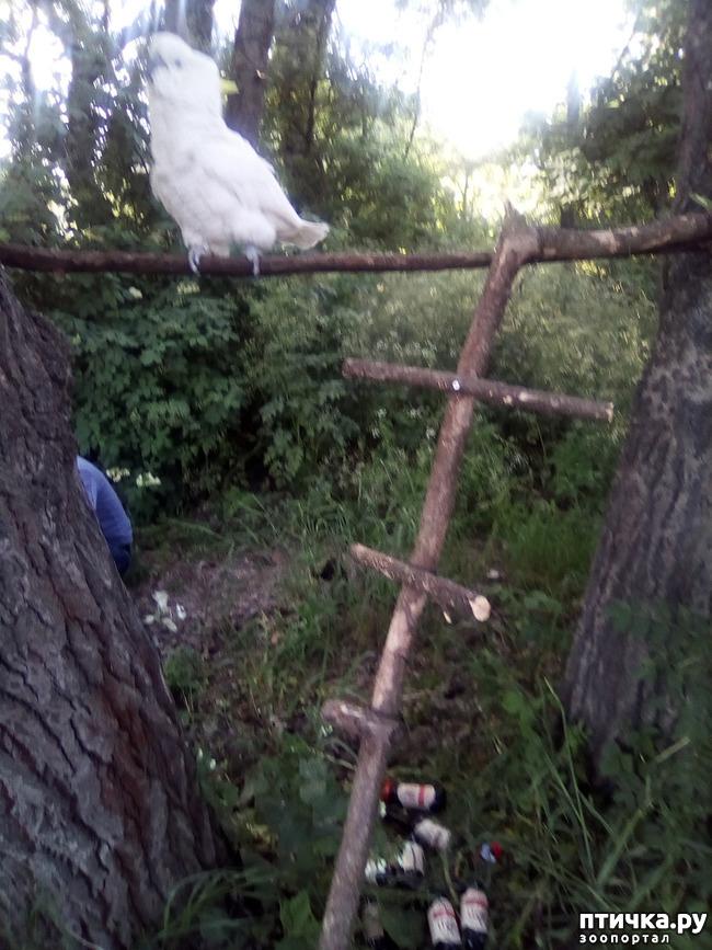 фото 10: Наносооружение для какадушника