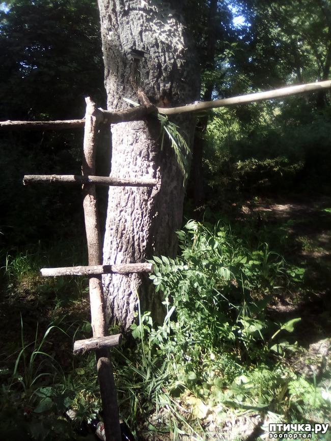 фото 1: Наносооружение для какадушника
