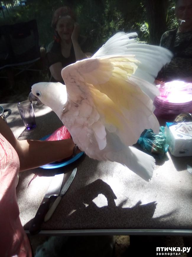 фото 3: Наносооружение для какадушника