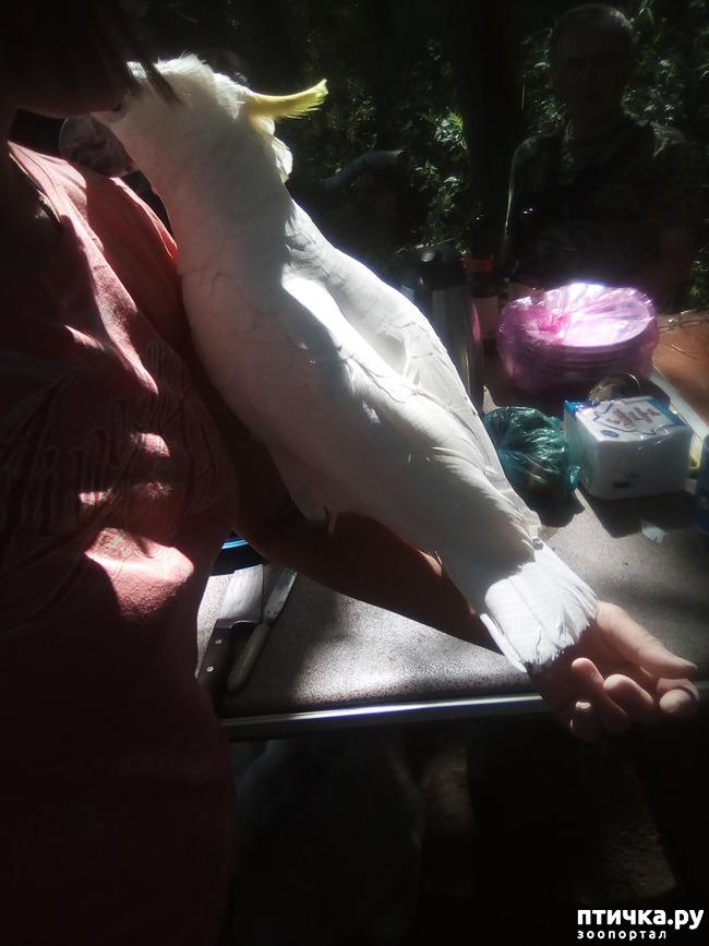 фото 5: Наносооружение для какадушника