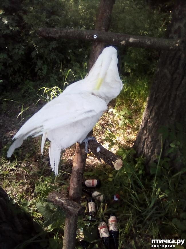 фото 11: Наносооружение для какадушника