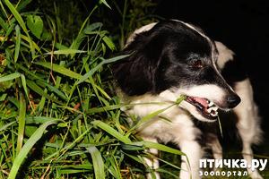фото: Зачем собаки едят траву