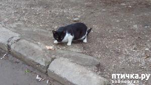 фото: Кошачьи новости и не только