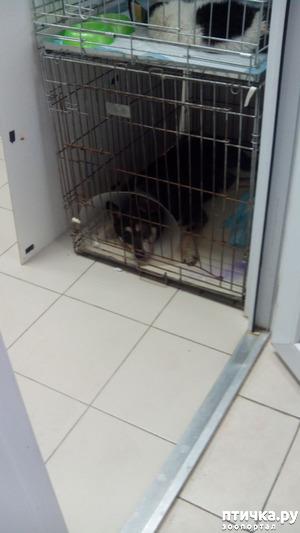 фото: Новости про собакена