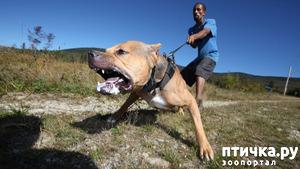 фото: Как разойтись с агрессивно настроенной собакой