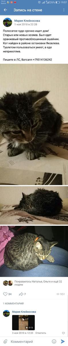 фото: Мой кот Вениамин