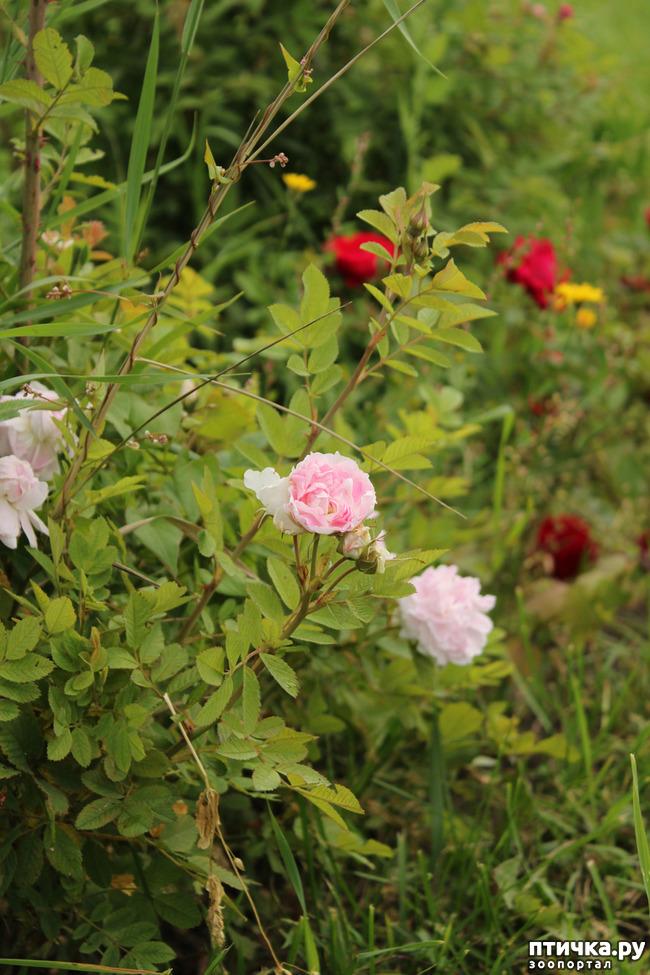 фото 3: Вспоминая лето. Август. Брестский парк.