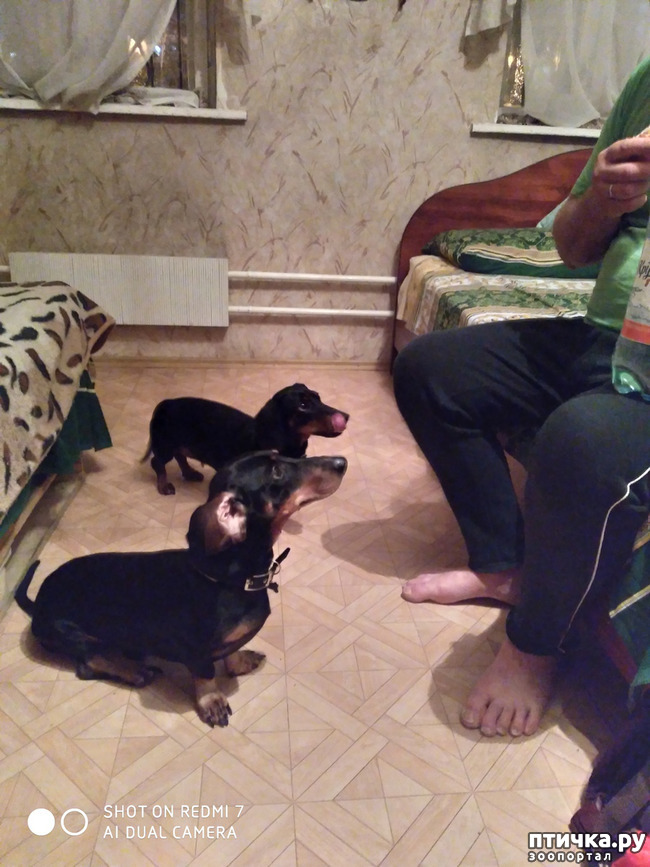 фото 5: Поездка с собаками. Тольятти.