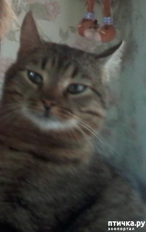 фото: Кот, который сам вернулся домой. На своих четырёх - из Москвы в Солнечногорск под проливным дождём за девять дней.