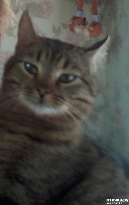 фото 1: Кот, который сам вернулся домой. На своих четырёх - из Москвы в Солнечногорск под проливным дождём за девять дней.