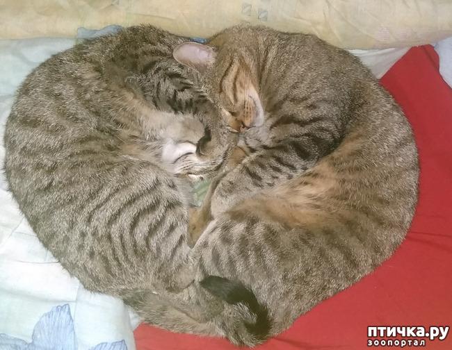 фото 3: Кот, который сам вернулся домой. На своих четырёх - из Москвы в Солнечногорск под проливным дождём за девять дней.