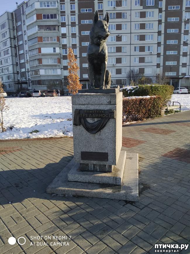 фото 12: Поездка с собаками. Тольятти.