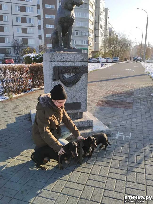 фото 13: Поездка с собаками. Тольятти.