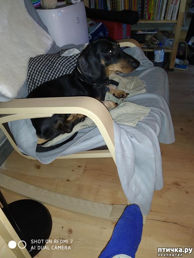 фото 3: Если собака лает, что делать