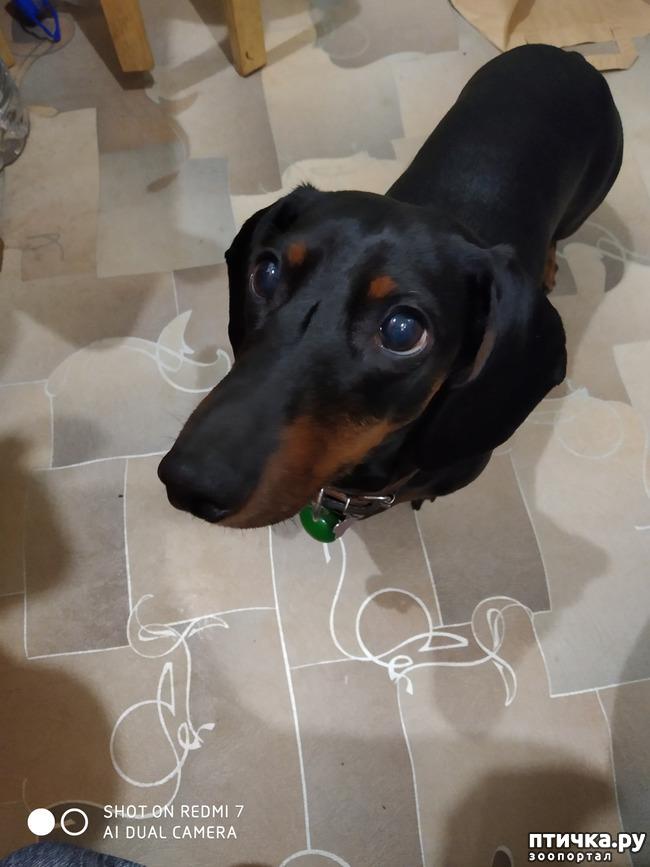 фото 2: Если собака лает, что делать