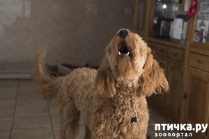 фото: Если собака лает, что делать