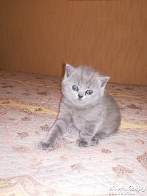 фото: Наши котятки
