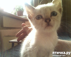 фото: Грустная история о дружбе кошек. Вакса и Шкода.