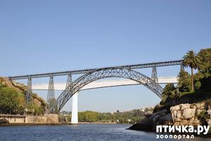 фото: Португалия. Порту. Эйфель и портвейн.
