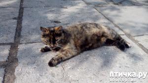фото: Пропала кошка