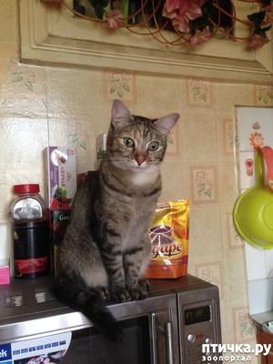 фото: Взрослая кошка стала мочиться на диван