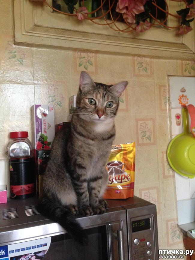 фото 1: Взрослая кошка стала мочиться на диван