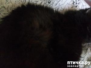 фото: Рассказ о том, как Казимир заболел и потом лечился (кальцивирус)