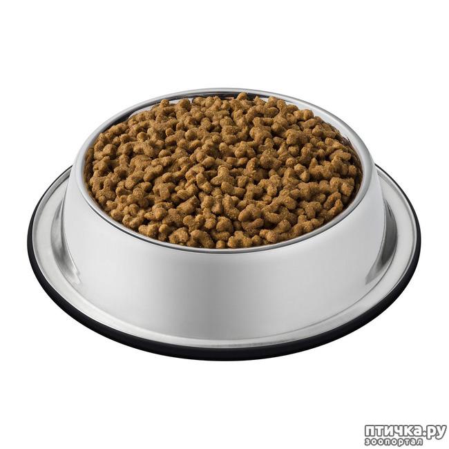 фото 1: Корм для кошек и котов